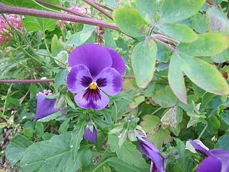 fleurs de chez ma grand mére (5)
