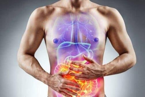 L'intolérance au gluten et les effets sur l'intestin