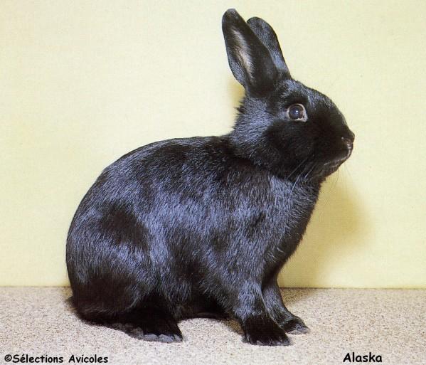 Alaska-copie-2