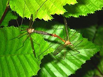 moustiques-saint-mitre-les-remparts-france-1340053630-13065.jpg