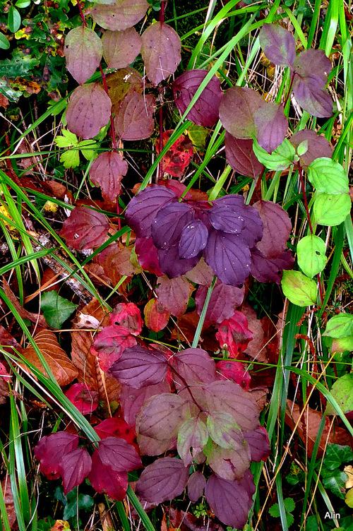 Couleurs d'automne : jolies feuilles !