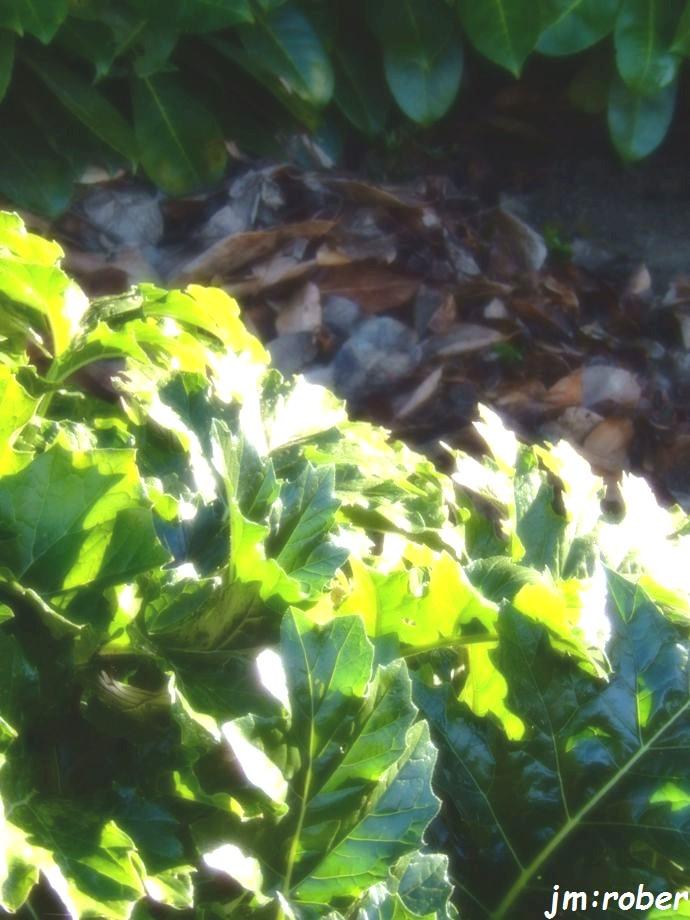 Un cache pour l'hiver dans mon jardin....