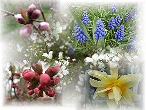 printemps-IMAGE-4-fleurs-jolies-.jpg