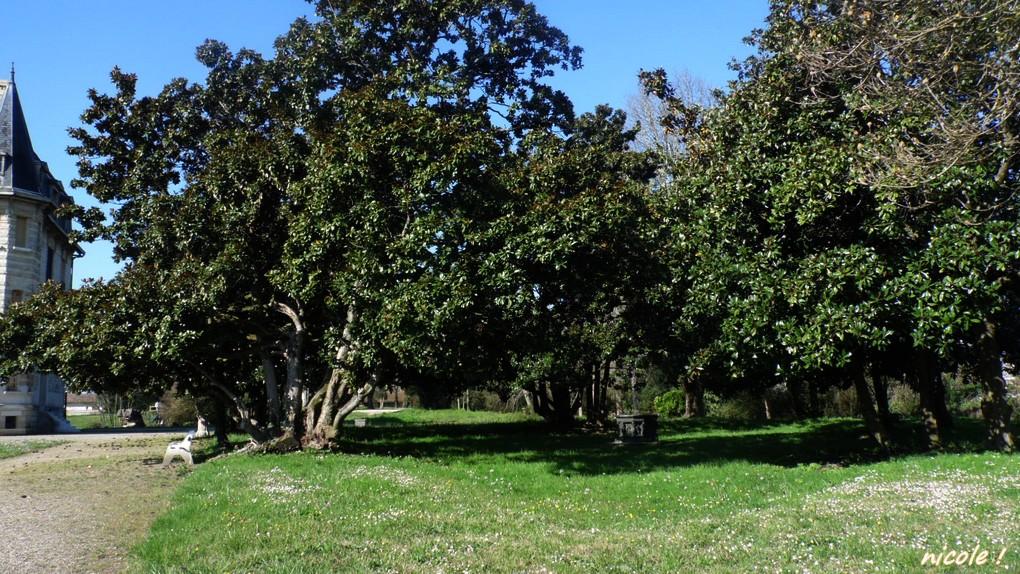Les arbres         2 mai