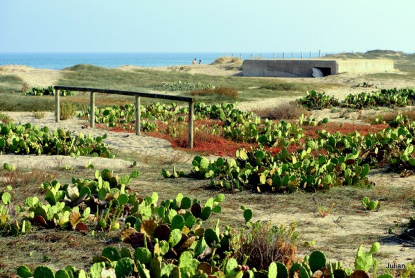 z03---Sur-la-plage.JPG