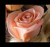 *** Douceur de Roses ***