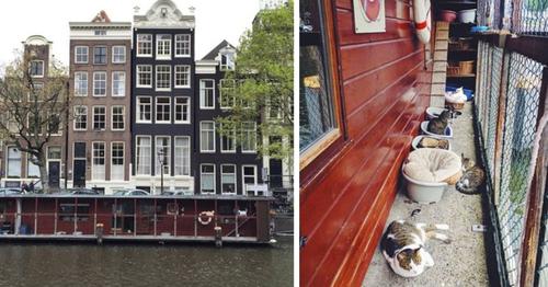 Un refuge pour chats qui flotte sur l'eau à Amsterdam