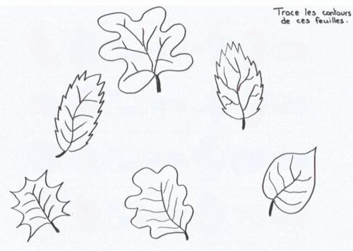 Graphisme : contours de feuilles d'automne (GS)