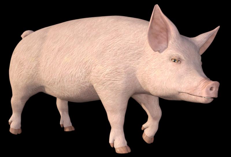 Tube de cochon (image-png-render)