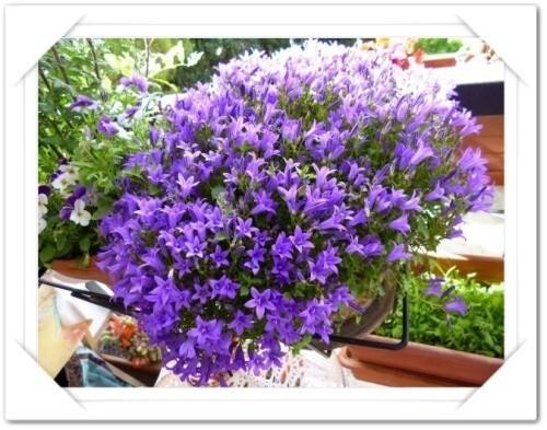fleurs-mai-2014.jpg