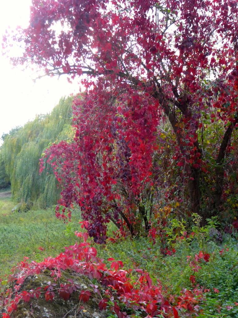 Fleurs et Couleurs d'arbre fin octobre.
