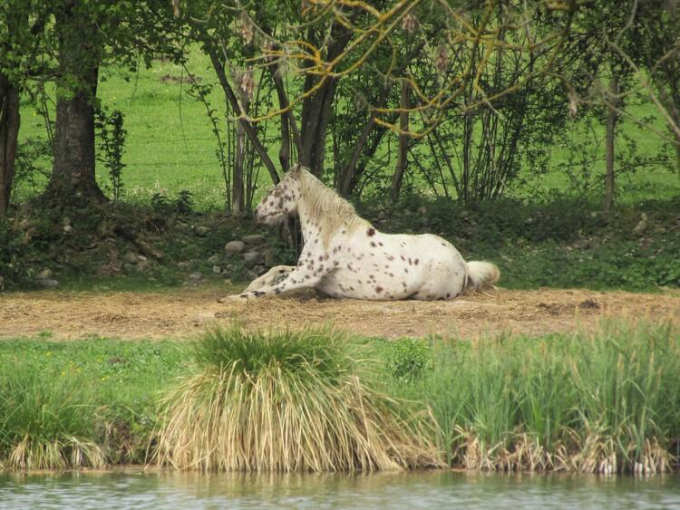 Les étangs de Beaucroissant