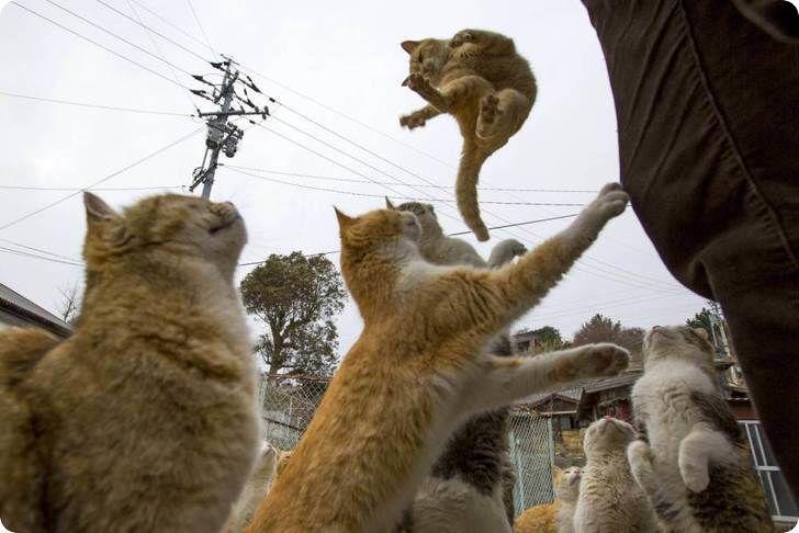 chat saute pour nourriture