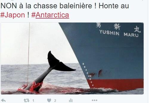 Occitanie : Polémique contre campagne contre la chasse japonaise