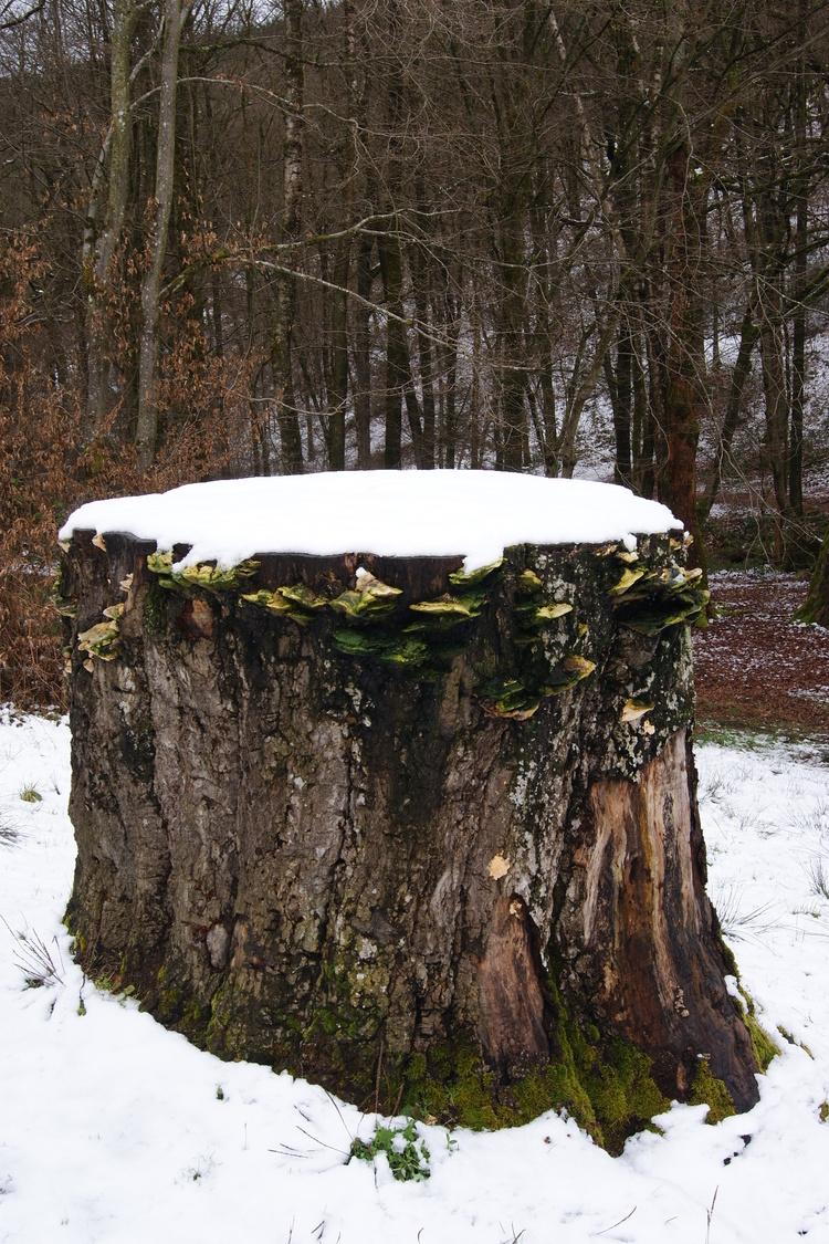 Errance dans les bois mystérieux d'Arduinna