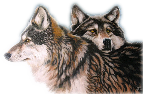 Loups Série 4