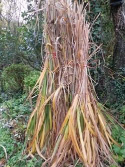 Protection hivernale des  plantes