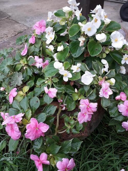 Encore un peu de fleurs du jardin