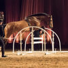 cheval b