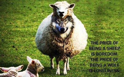 moutons ou loup... wallpaper