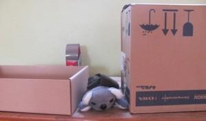koala-entre.jpg