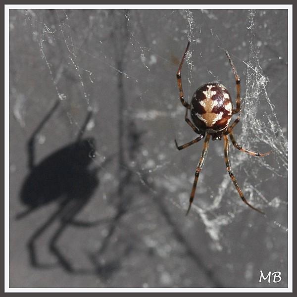 Arachnides 0605
