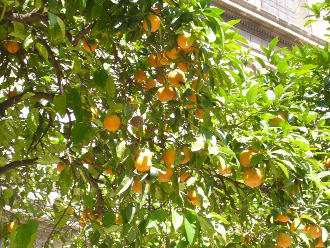 Seville Orangers