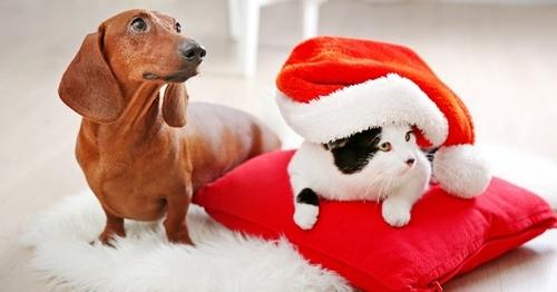 On n'offre pas un animal de compagnie comme un jouet !