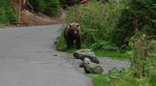 Au pays des ours......
