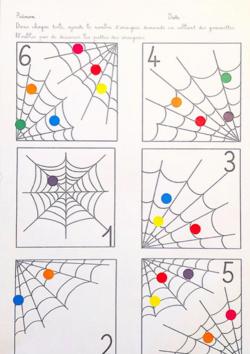 Dénombrement araignée