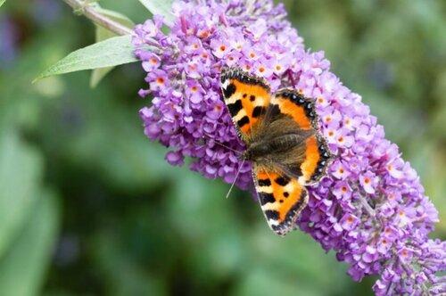 Faites venir les papillons