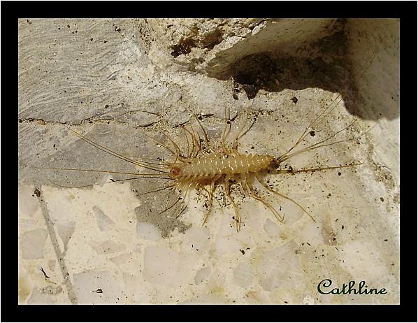 Bestiole-a-identifier--avril-2011.jpg