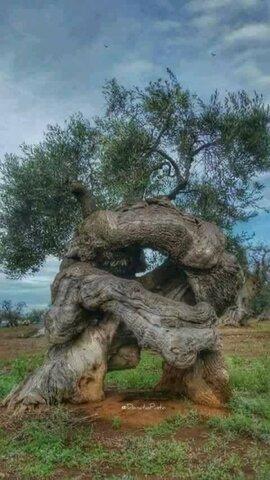 Le coucou du vendredi, haïku, senryû, thème la nature en contes de fée...