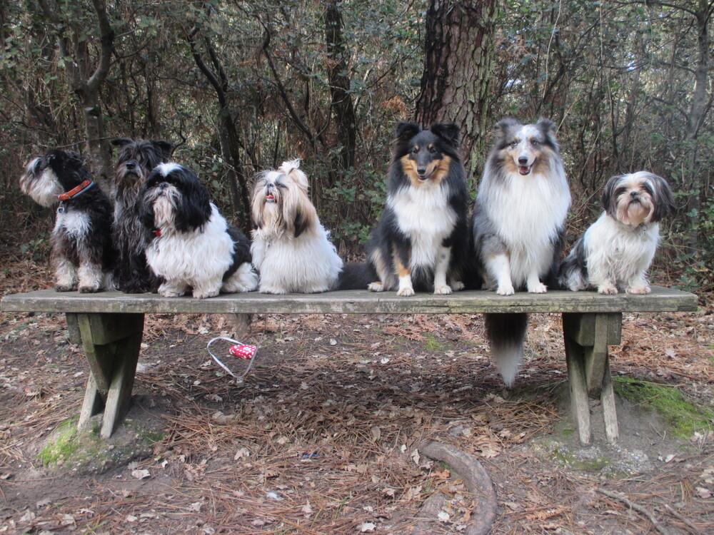 Une belle vie de chien !