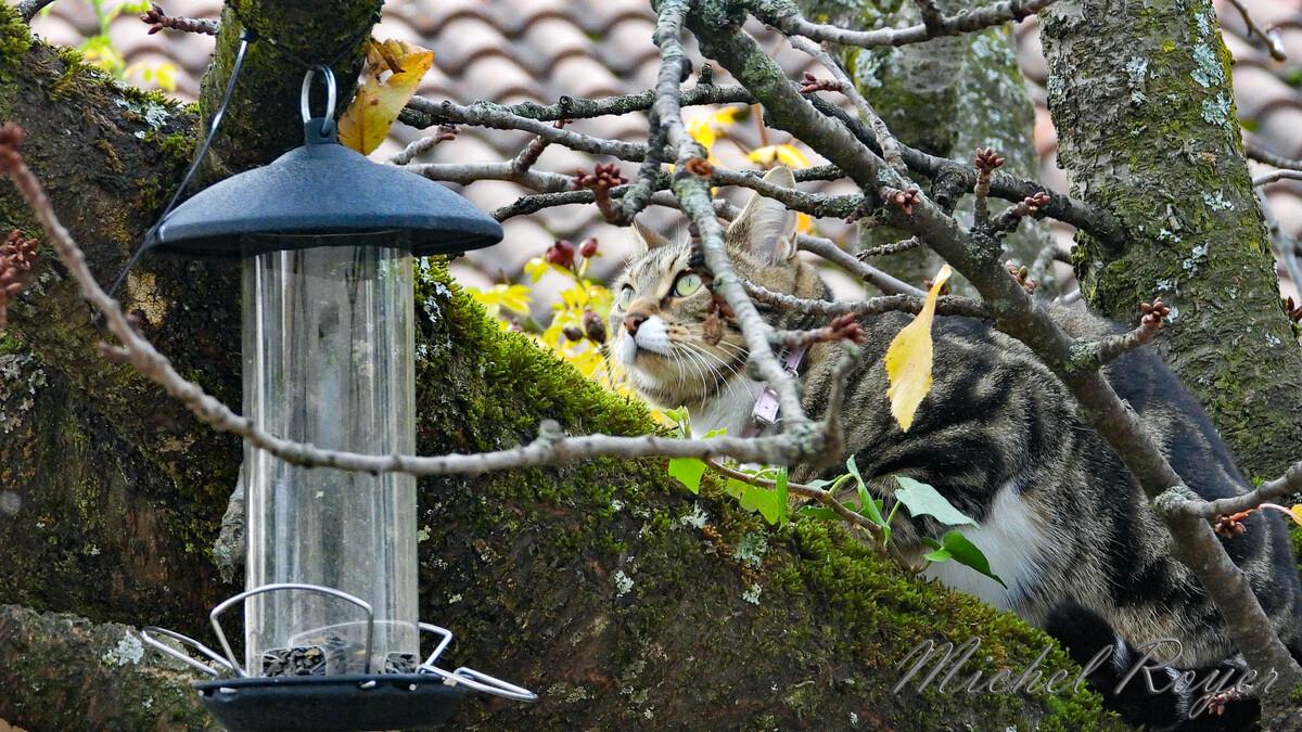 Chat croqueur d'oiseaux.
