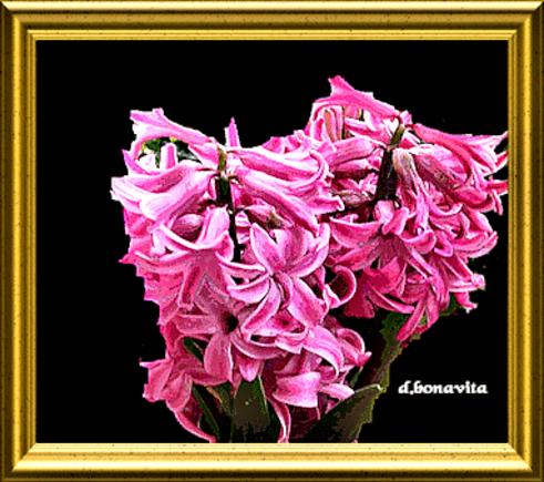 """Les Fleurs de mon Jardin"""""""