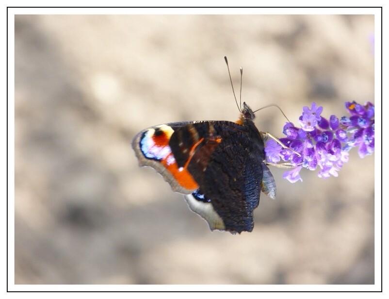 Captures  d'insectes