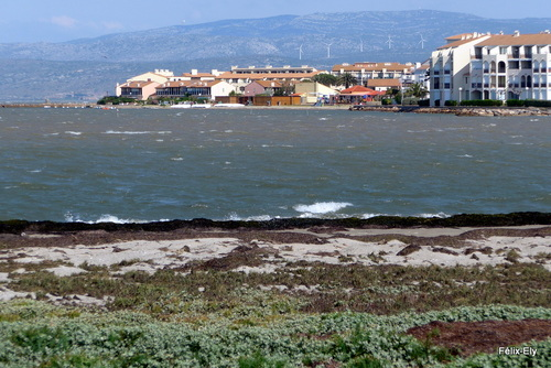 Promenade au bord du lac marin de Salses (2)