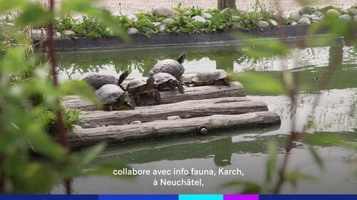 Des chiens dressés pour détecter des œufs de tortues