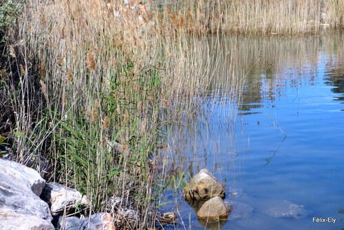 Plantes et reflets (1)