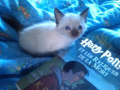 Le petit dernier de ma famille : Arya
