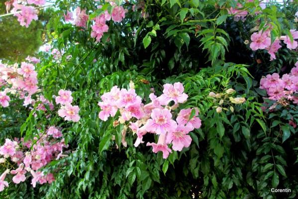 dk25---fleurs-1.JPG