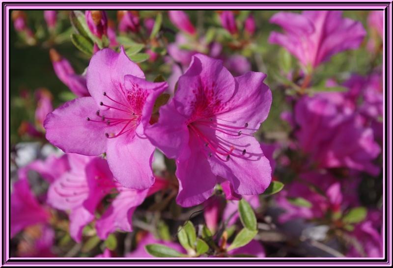 Blue et quelques fleurs