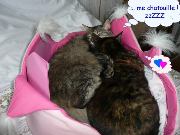 Dangers de l'été pour les chats