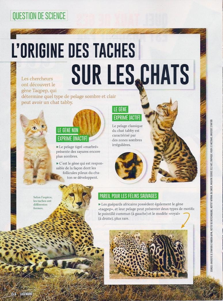 Articles sur les chats:  L'origine des taches sur les chats