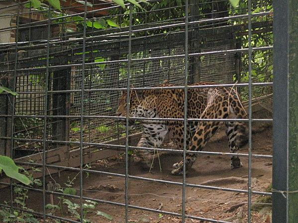 robe;Zoo de Beauval 27 juillet 2009 282