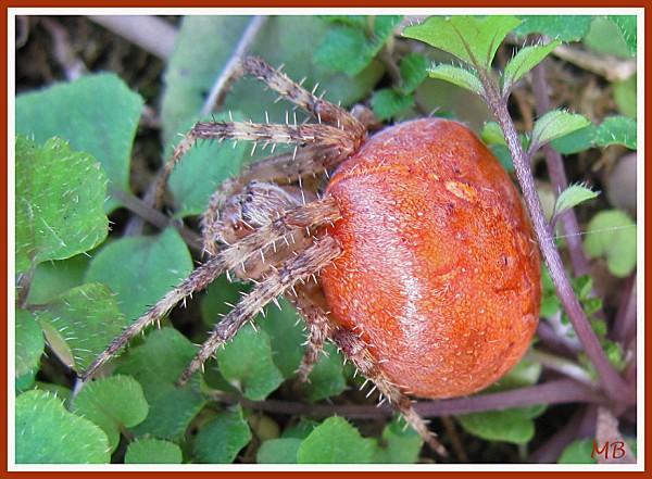Arachnides 1444