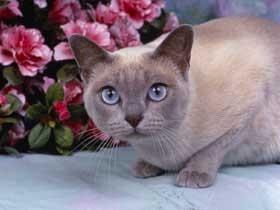 CAT02RK013602