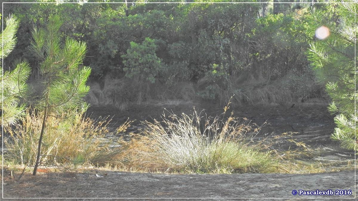 Les Réservoirs de Piraillan - Octobre 2016 - 3/10