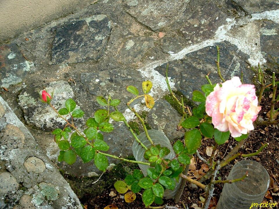 Les dernières salves de fleurs
